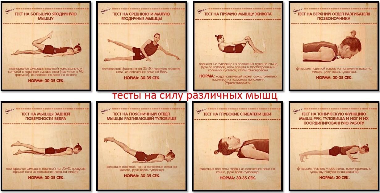 тест на силу различных мышц