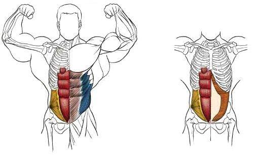 Анатомия мышц упражнения скручивание на наклонной скамье