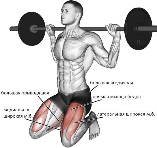Приседания на коленях со штангой мышцы