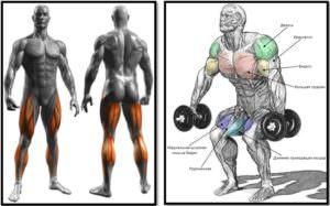 Приседания с узкой постановкой ног, мышцы