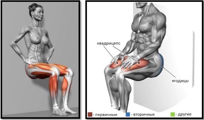 Приседания у стены мышцы