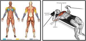 Жим лежа в кроссовере мышцы