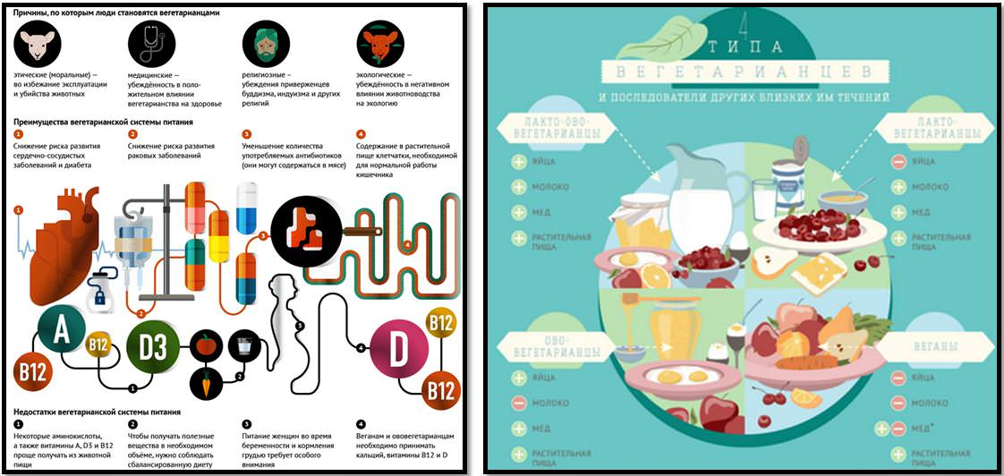 вегетарианство инфографика