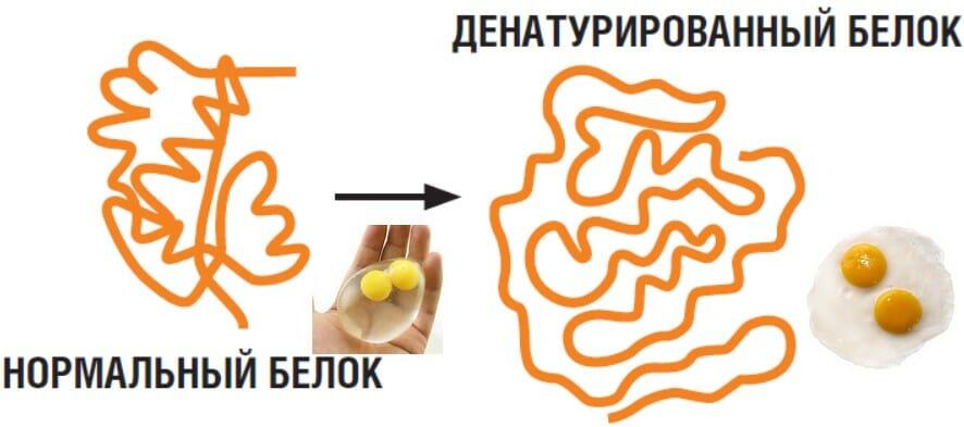 воздействие температуры на белок