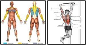 Подтягивания широким хватом мышцы