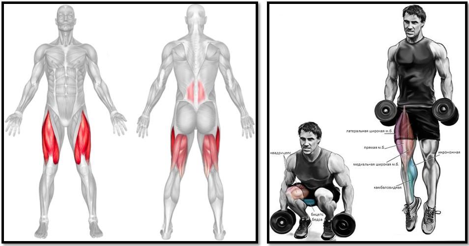 Приседания с выпрыгиванием мышцы