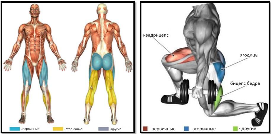 Ходьба выпадами мышцы