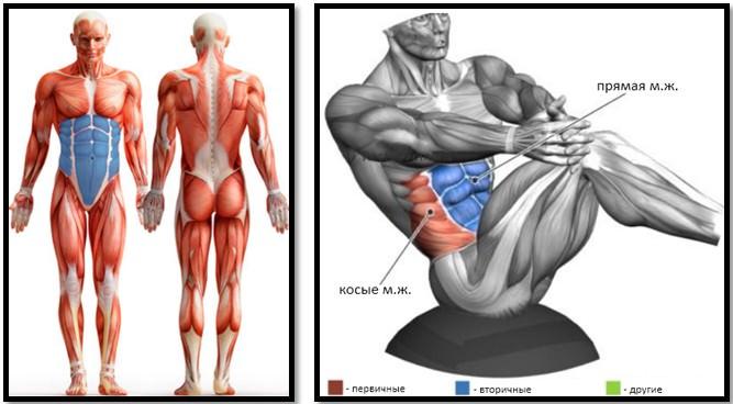 Упражнение русский твист мышцы