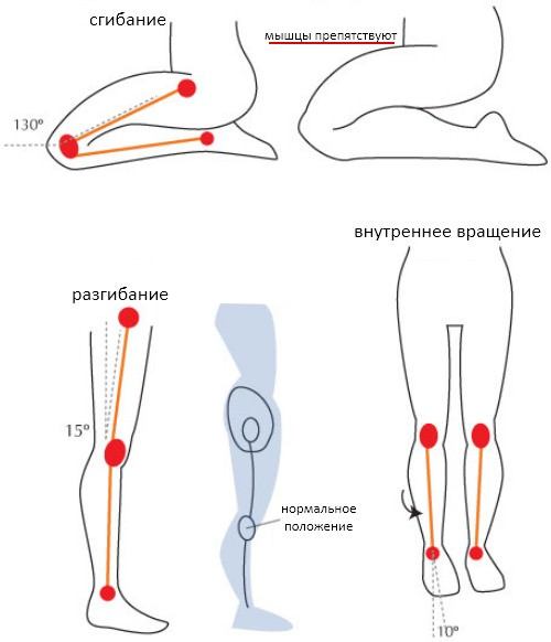 Диапазон движения knee joint
