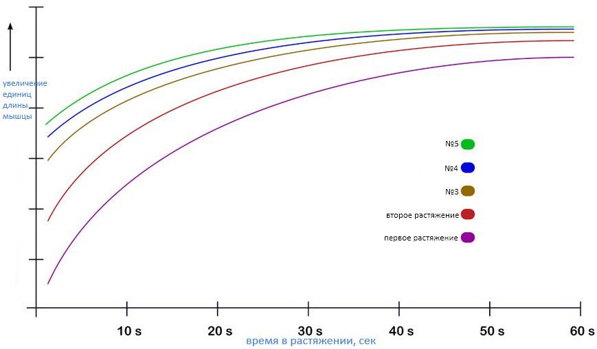 Иллюстративные кривые изменения длины мышц и времени в растяжении