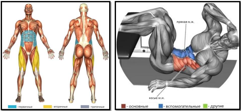 Косые скручивания мышцы