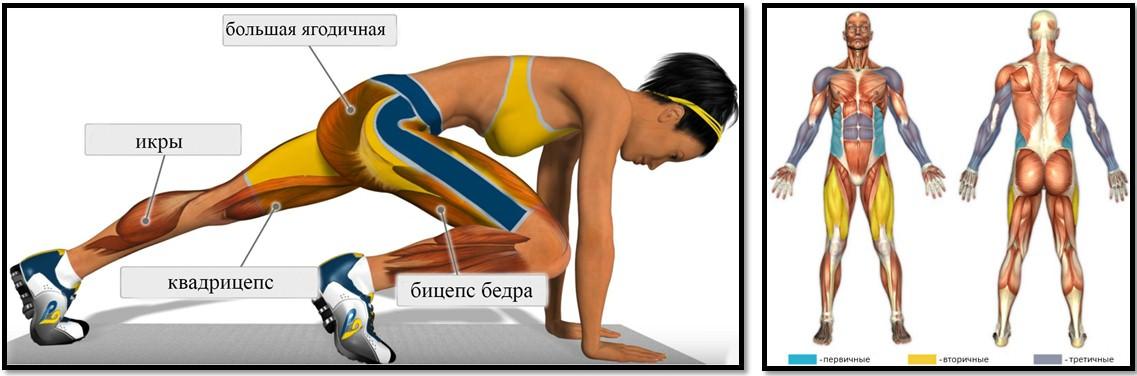 Упражнение скалолаз, мышцы