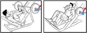 как правильно страховать при жиме ногами и гакк-приседаниях