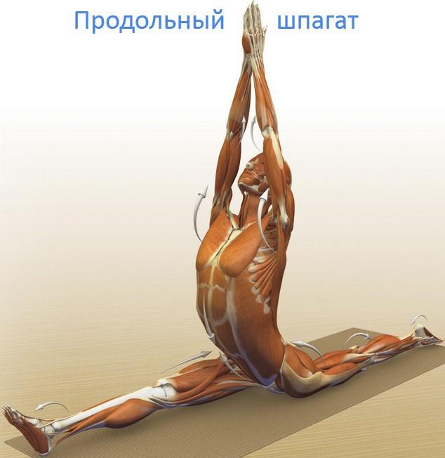 продолбный шпагат, положение основных суставов