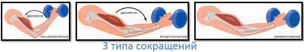 3 типа сокращений мышцы