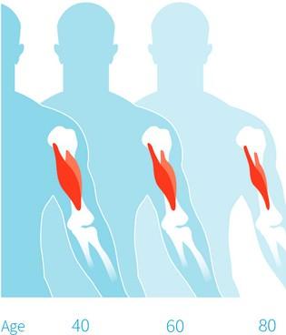 Что происходит с мышцами человека в возрасте
