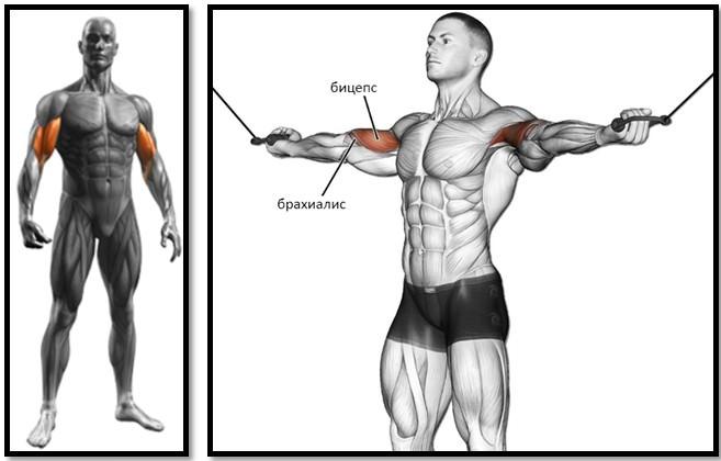Сгибание рук на бицепс над головой на верхнем блоке мышцы