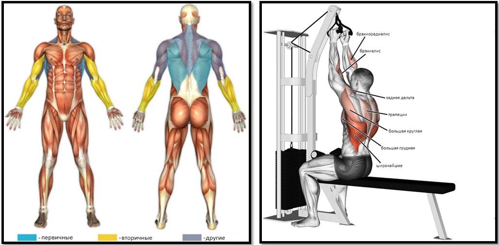 Тяга верхнего блока узким хватом мышцы
