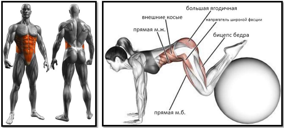 Упражнение подтягивание ног к груди на фитболе мышцы
