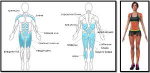 Упражнение звезда мышцы