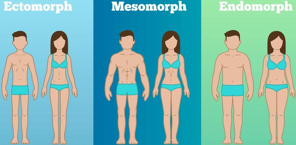 3 типа телосложения с примерами