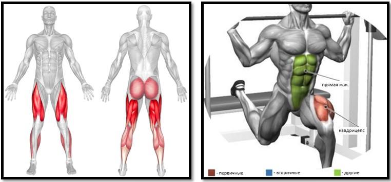 Болгарские выпады в тренажере Смита мышцы