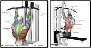 Тяга верхнего блока обратным хватом мышцы