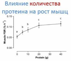 Влияние количества протеина на рост мышц
