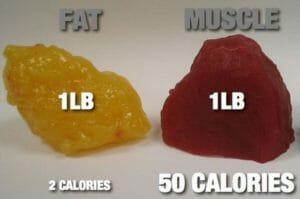 мышцы и жир, расход калорий