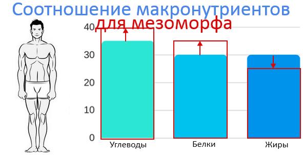 Мезоморф. Соотношение БЖУ