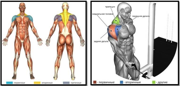 Отведение руки в сторону на блоке, мышцы