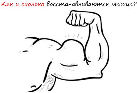 сколько восстанавливаются мышцы после тренировки лого
