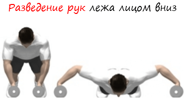 Разведение рук лежа лицом вниз лого