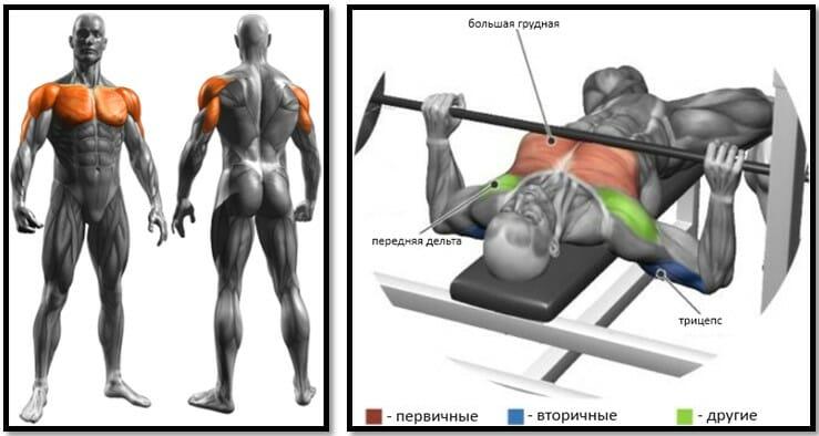 Жим штанги лежа широким хватом мышцы