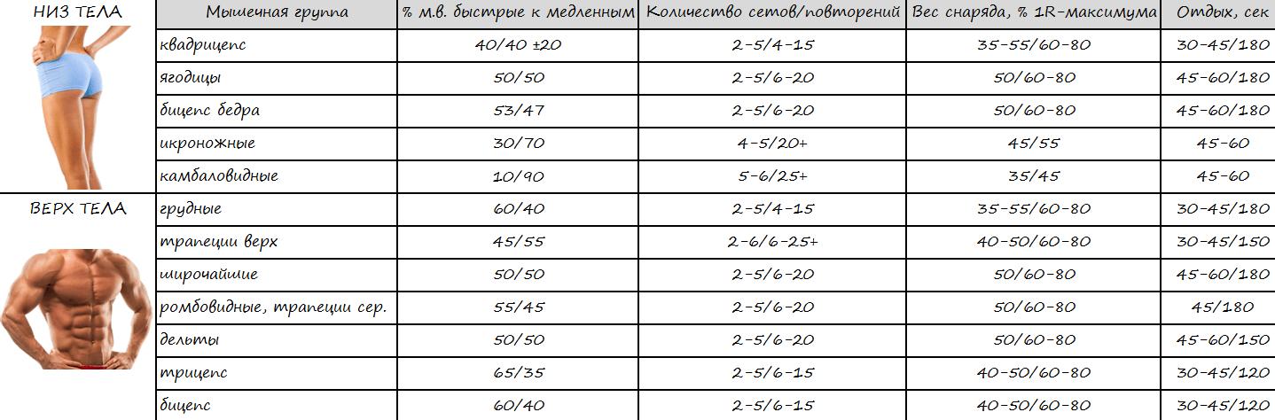 Мышечные волокна сборная таблица по всем мышечным группам