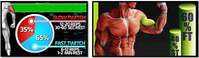 Руки мышечные волокна