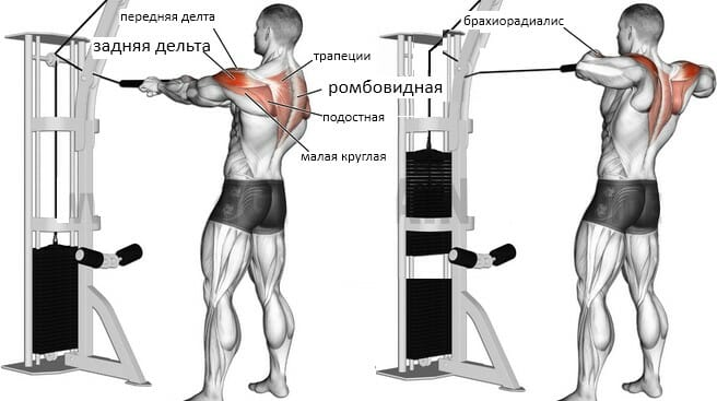 Тяга канатной рукояти к лицу, мышцы