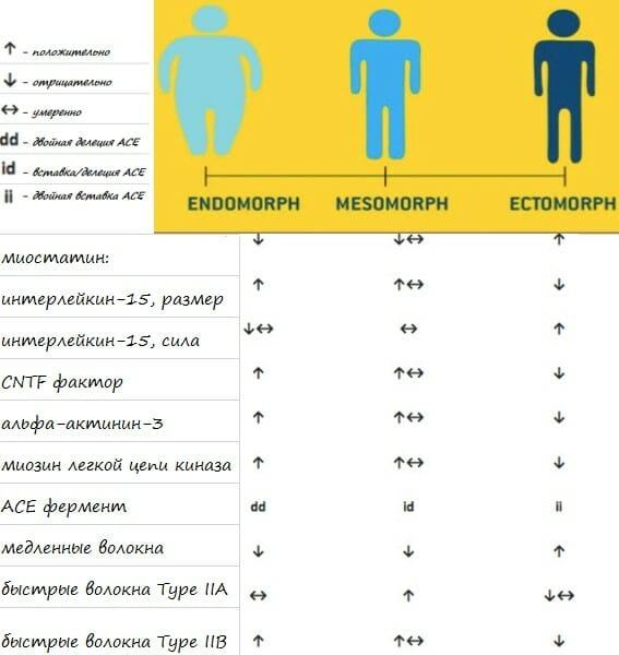 генетические факторы, которые влияют на изменчивость генотипа