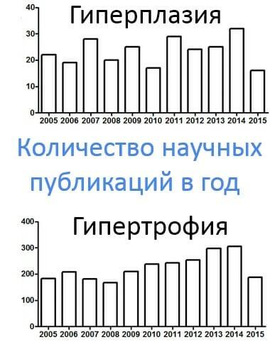 количество научных публикаций в год по гипертрофии и гиперплазии мышц
