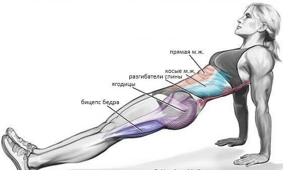 Обратная планка, мышцы
