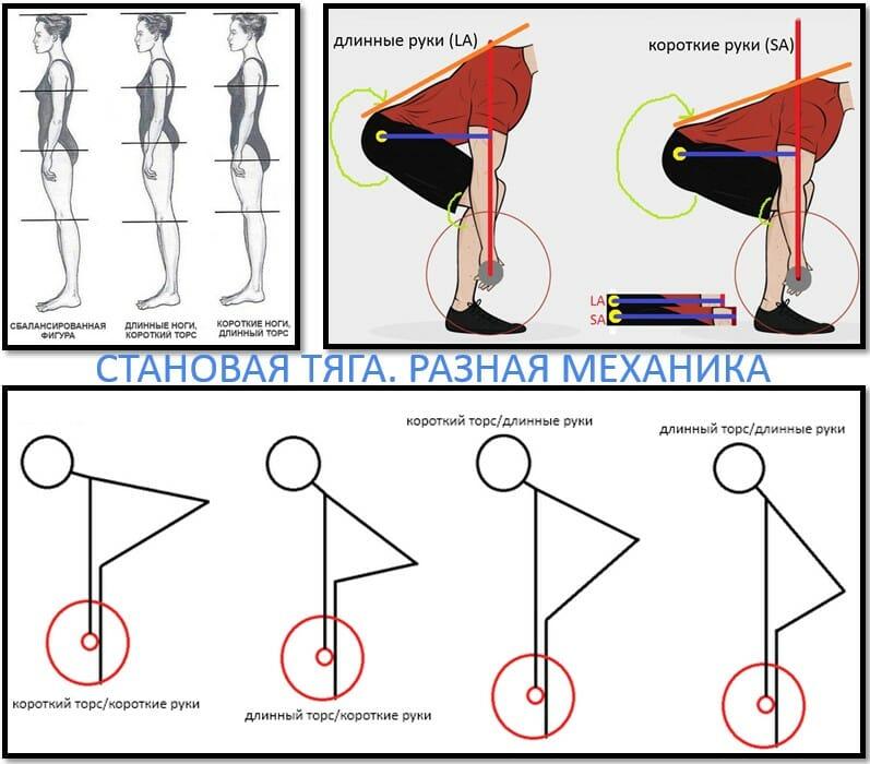 Становая тяга силы, механика в зависимости от длины конечностей