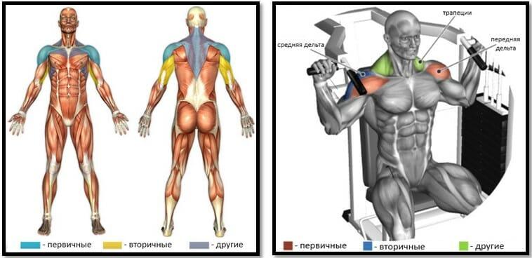 Жим на плечи в тренажере мышцы