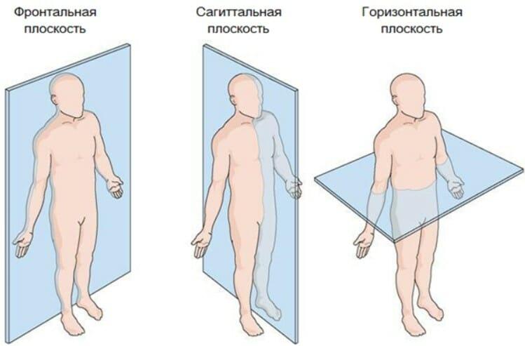 анатомические плоскости