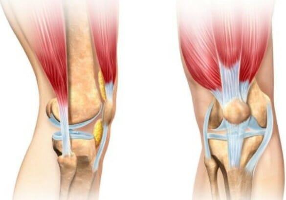 анатомия колено