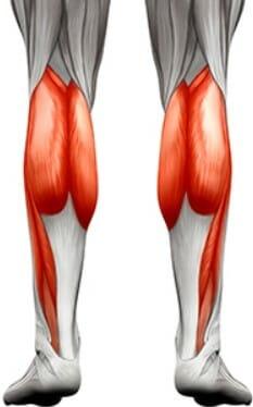 анатомия мышцы голени