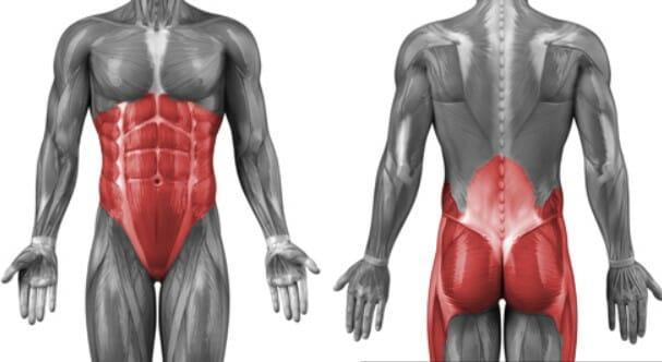 анатомия мышцы кора