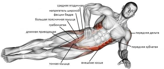 Динамическая боковая планка мышцы