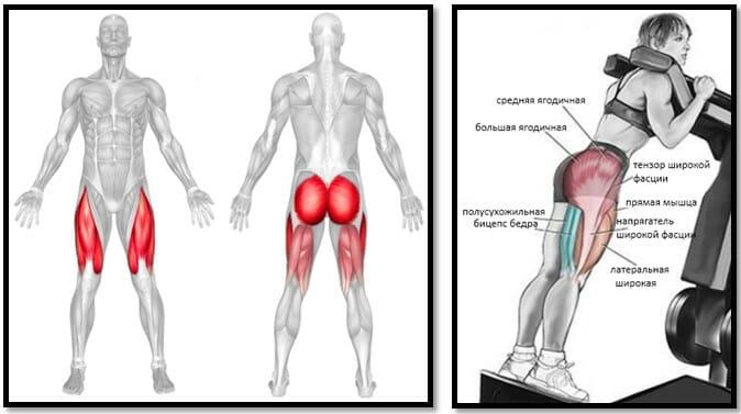 Обратные гакк-приседания, мышцы
