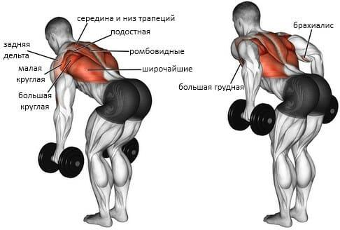 Тяга двух гантелей в наклоне, мышцы