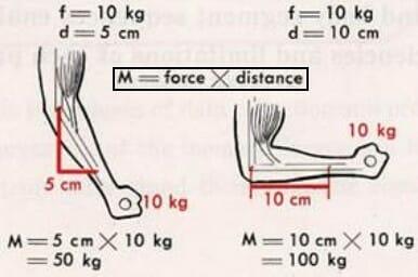 момент силы упражнение подъем штанги на бицепс